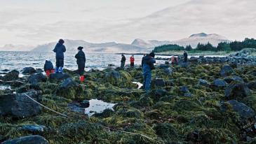 Vid ebb torrläggs stranden så att zonering av olika alger och djur kan undersökas<br />