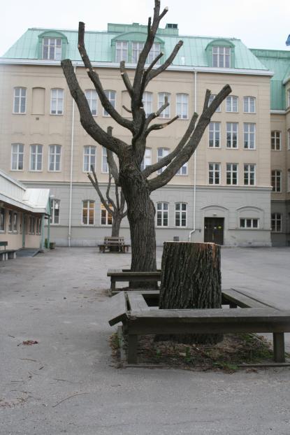 Skolgården efter motorsågen framfart