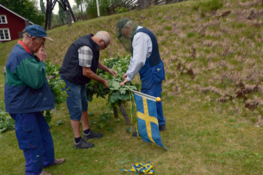 Tidigt i morse började förberedelserna för dagens Midsommarfirande i Hembygdsgården i Bollebygd.