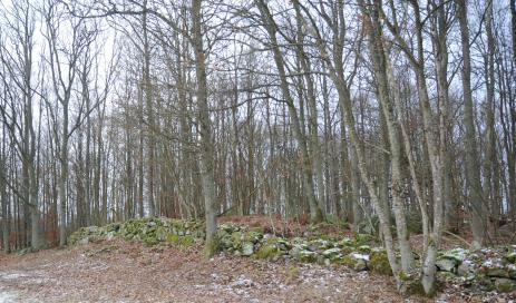 Efter röjnings jobbethar man lyft fram stenmuren och det blir mycket mera ljus i skogen.