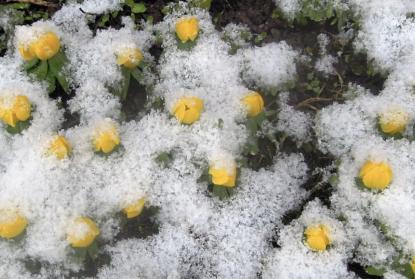 Lite snö på vårdagjämningen