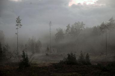 Mitt i trollskogen tillverkar Tomas och Ellen Axelsson sina unika troll.