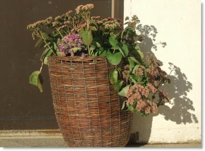 Bevara våra fina blommor!