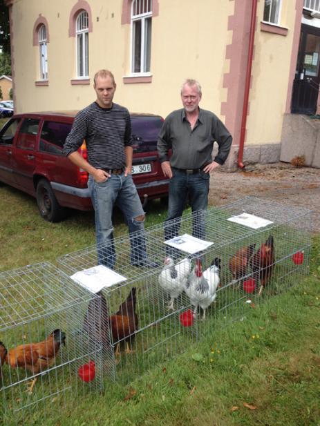 Olle Ohlsson och Daniel Paulrud hade kommit från Blekinge rasfjäderfäklubb och visade upp nio olika hönsraser.