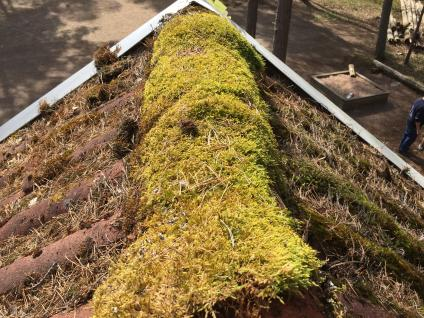 Mycket mossa hade växt på taket.