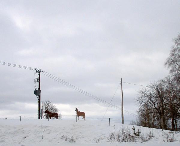 Hästar i Öd