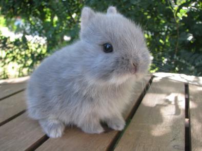 Hermelin kanin!