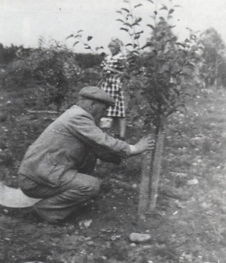 Frank Sanberg planterarettavfruktträden i Örseryd. (Fotograf okänd)