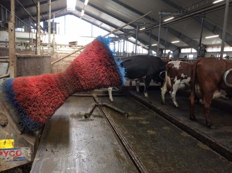 I dag är kostallarna mycket mer anpassade till kornas behov och i stallarna finns det kliborste för korna, men också ett fotbad.