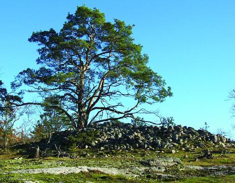 Bronsåldersröse på Båknaberget