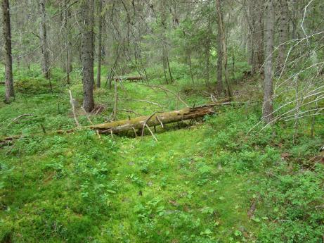 Här ser man klart och tydligt den stig/kärrväg som användes förr i tiden