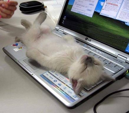 Mysz zginęła, klawiatura zablokowana.