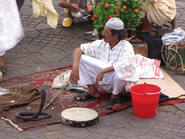 Marrakech - snake charmer
