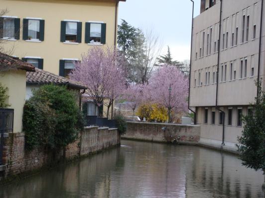 Våren har kommit till Treviso!