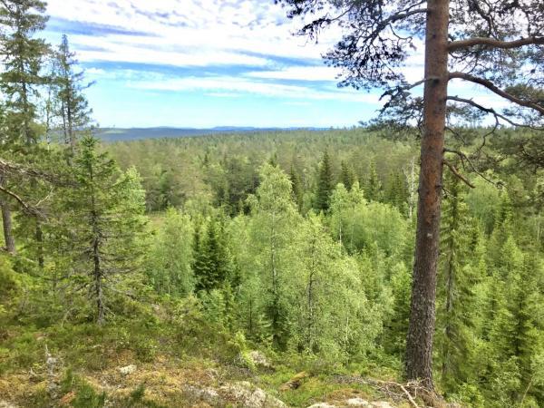 Utsikt från Svedjeberget. Troligen Äskjastugan långt i fjärran