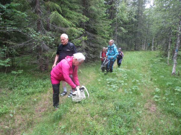 Vandring och röjning på Vildmarksleden 26 juni. Ulla, Anders, Karin, Eileen och Anne-Marie