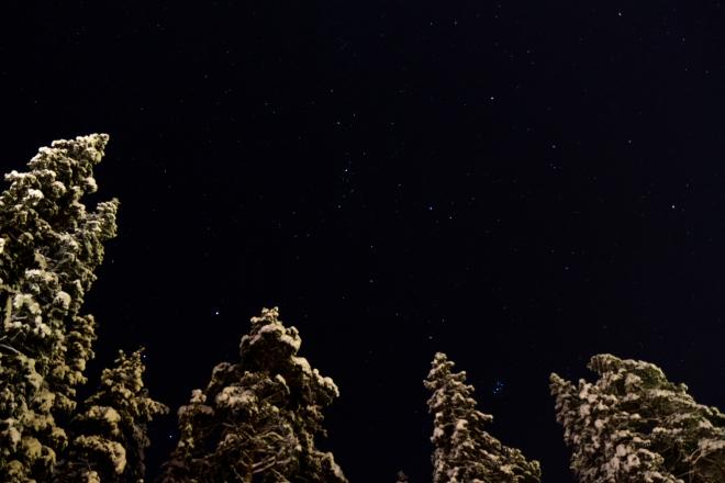 Ovan grantopparna finns de - stjärnorna!