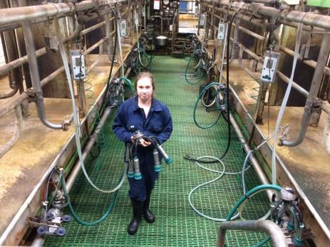 - Mjölkgropen har flera olika bås där korna ställer sig för att bli mjölkade. Mjölkningen tar i dag bara några minuter, förklarar Ebba.