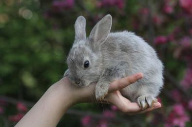 Ljusgrå kanin!