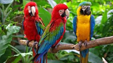 Här är en bild på Macaws.