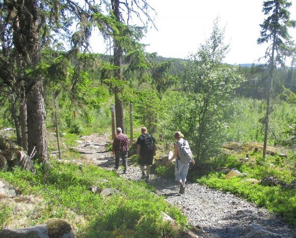 Siv, Hans-Roland och Eileen på väg från Äskjastugan till Mäjasjön