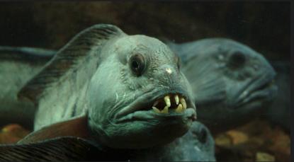 Fisken var inte bara dåligt tillagad även arten var okänd. Sodexo har lovat men glömt att ange vad de serverar. Kan detta vara en seg fisk.