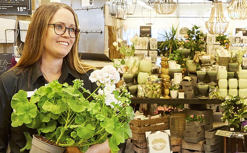Klassiker. Den vita mårbackapelargonen är ett säkert kort, tipsar Sanna Giger, avdelningschef på City Knallelands växthus.