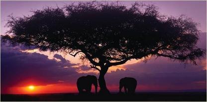 Alexander McCall Smiths böcker är en skildring av Afrika.
