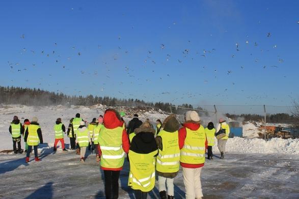 Fåglarna skrämdes då och då av elever och stora fordon.