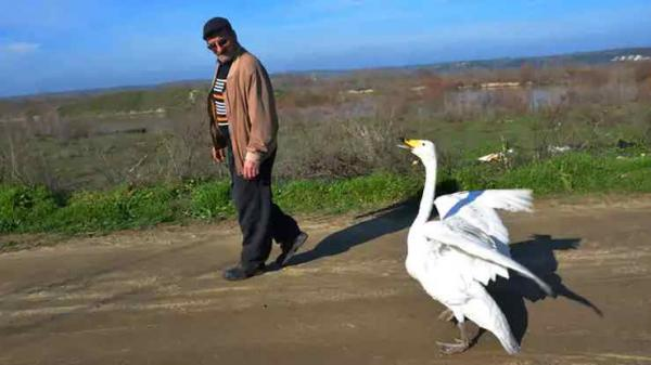 <span>Recep Mirzan döpte svanen till Garip. Garip har sedan dess även blivit vän med katter och hundar i området. Hon följer Recep Mirzan vart han än går, oavsett om det handlar om sysslor på gården eller den dagliga kvällspromenaden.</span>