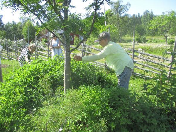 Monica berättar om ett träd och om den nyttiga busken blåbärstry