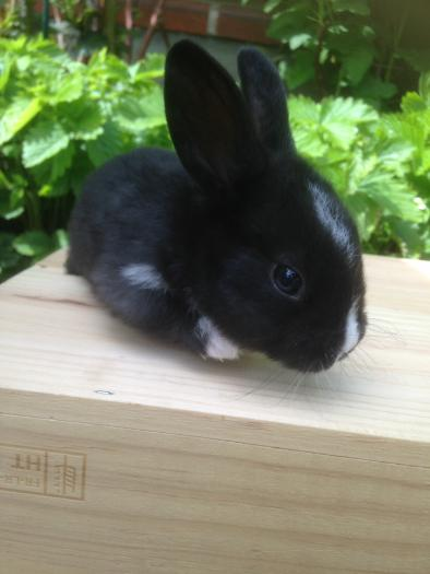 4 fakta om kaniner gemobladetse