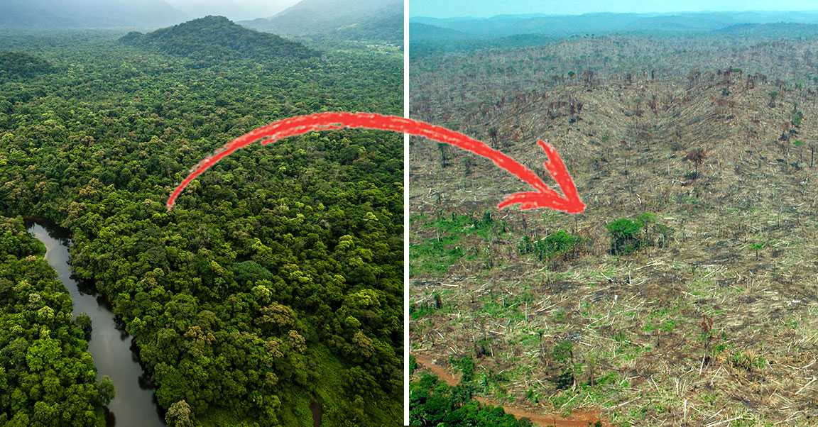 739 kvadratkilometer av Amazonas regnskog försvann på grund av skövling under maj 2019.