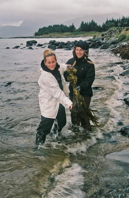Artbestämning av alger och bottenlevande djur <br />