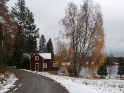 Vackert med löven som fortfarande lyser gula mot den vita snön.