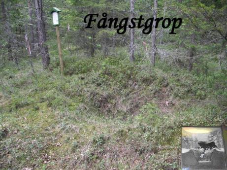 Fångstgrop i Viksäter efter Saltsjövägen.