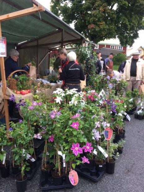 På årtes Skörde- och Växtmarknad kunde besökarna botanisera bland hela fyrtio olika utställare som sålde allt från bland annat blommor, växter, grönsaker till frukt och pumpor.
