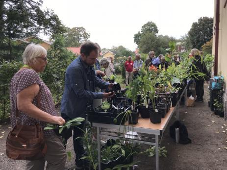 I Svenmanska parken hade man försäljning av växter.