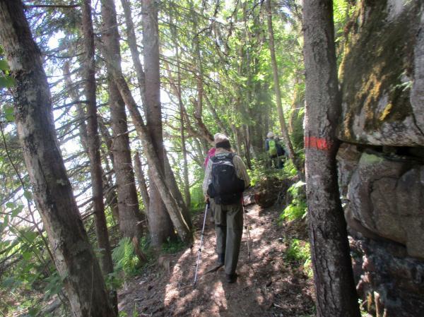 Bergvägg och många träd längs stigen
