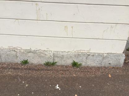 Estethusets vägg. Äggskal på asfalten och ägg som missade \