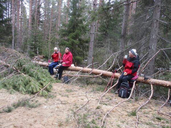 Andra parkett i Skogskaféet