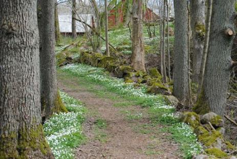 I vackra Dönhult finns Sten-Ebbe och berättar bland annat om kvarnen som funnits här.